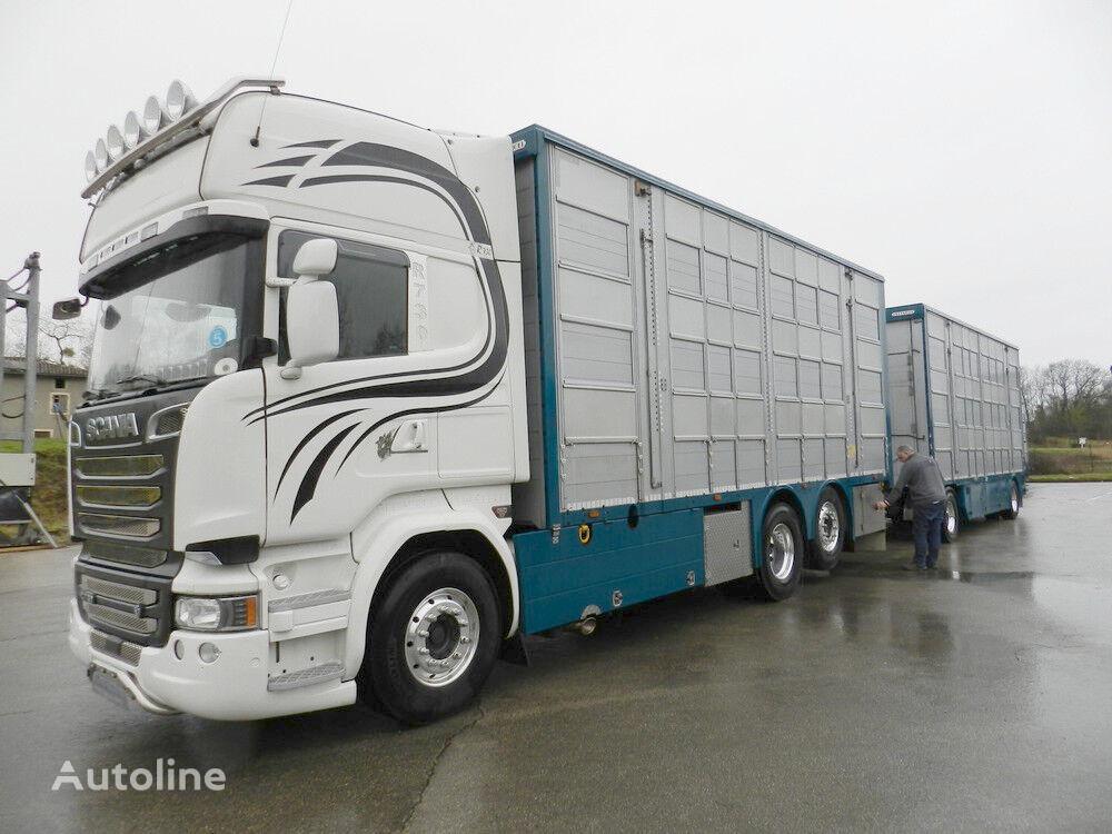 скотовоз SCANIA R 730 V8 For cattle transport + причіп скотовоз