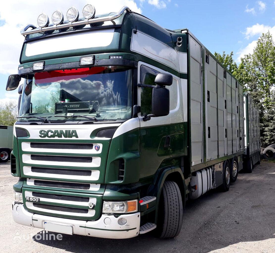 скотовоз SCANIA R500 V8 for pigs - calves - sheeps. + причіп скотовоз